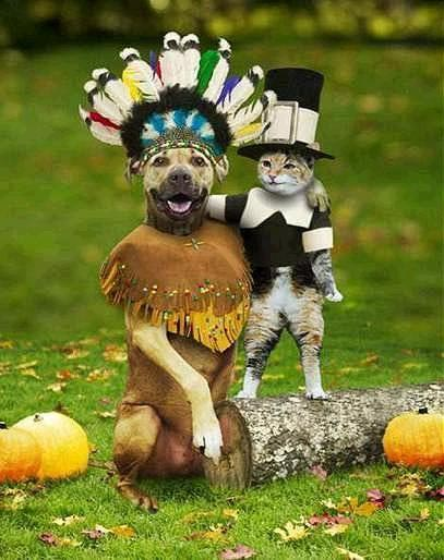 I guess even cats and dogs can get along for Thanksgiving