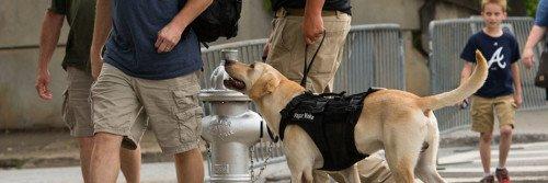 A Vapor Wake dog working a crowded public venue.