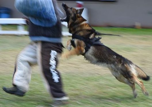 Though not as dramatic, my K-9 take-down was just as deserved (photo by af.mil U.S. Air Force).